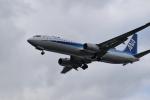 romyさんが、ボーイングフィールドで撮影した全日空 737-881の航空フォト(写真)