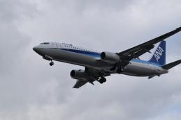 romyさんが、ボーイングフィールドで撮影した全日空 737-881の航空フォト(飛行機 写真・画像)