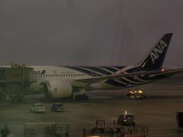 tamonさんが、クアラルンプール国際空港で撮影した全日空 787-8 Dreamlinerの航空フォト(飛行機 写真・画像)