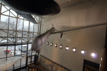 Koenig117さんが、National Air and Space Museumで撮影したアメリカ空軍 MQ-1L Predatorの航空フォト(写真)