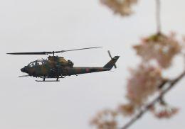 ふるちゃんさんが、滝ケ原駐屯地で撮影した陸上自衛隊 AH-1Sの航空フォト(飛行機 写真・画像)