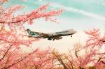 allnipponairwaysさんが、成田国際空港で撮影した日本貨物航空 747-8KZF/SCDの航空フォト(写真)