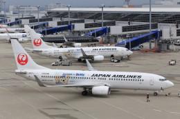 いっくんさんが、中部国際空港で撮影した日本航空 737-846の航空フォト(飛行機 写真・画像)