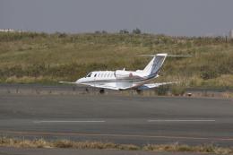 しかばねさんが、羽田空港で撮影したオートパンサー 525A Citation CJ2の航空フォト(飛行機 写真・画像)