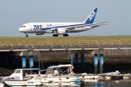 GNPさんが、松山空港で撮影した全日空 787-8 Dreamlinerの航空フォト(写真)