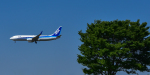 パンダさんが、成田国際空港で撮影した全日空 737-881の航空フォト(写真)