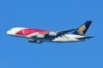 RUSSIANSKIさんが、シンガポール・チャンギ国際空港で撮影したシンガポール航空 A380-841の航空フォト(写真)