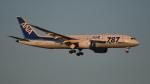 BeyondWorksさんが、羽田空港で撮影した全日空 787-8 Dreamlinerの航空フォト(写真)