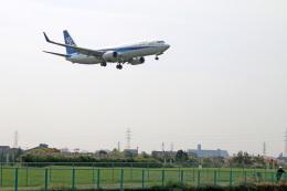 コバトンさんが、伊丹空港で撮影した全日空 737-881の航空フォト(飛行機 写真・画像)