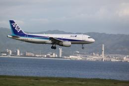 職業旅人さんが、関西国際空港で撮影した全日空 A320-214の航空フォト(飛行機 写真・画像)