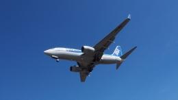 korosuke2913さんが、大連周水子国際空港で撮影した全日空 737-781の航空フォト(飛行機 写真・画像)