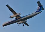 サボリーマンさんが、高知空港で撮影したANAウイングス DHC-8-402Q Dash 8の航空フォト(写真)