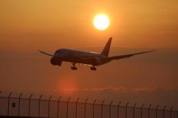 makochinさんが、松山空港で撮影した全日空 787-8 Dreamlinerの航空フォト(写真)