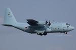 Scotchさんが、厚木飛行場で撮影した航空自衛隊 C-130H Herculesの航空フォト(写真)
