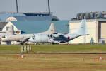 tsubasa0624さんが、厚木飛行場で撮影した海上自衛隊 C-130Rの航空フォト(写真)