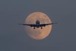 ファインディングさんが、羽田空港で撮影した日本航空 777-246/ERの航空フォト(写真)