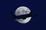RJFK_rw34さんが、羽田空港で撮影した全日空 787-8 Dreamlinerの航空フォト(飛行機 写真・画像)