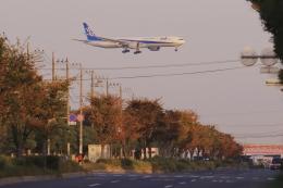 RUNDY!さんが、羽田空港で撮影した全日空 777-381/ERの航空フォト(飛行機 写真・画像)