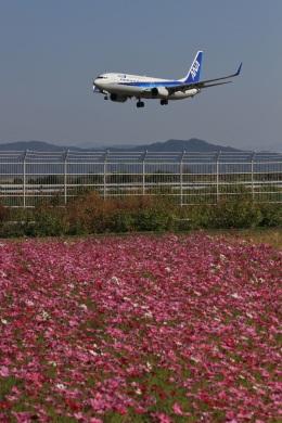 Ken-Tさんが、高知空港で撮影した全日空 737-881の航空フォト(写真)