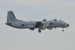 うめやしきさんが、厚木飛行場で撮影した航空自衛隊 YS-11A-402EBの航空フォト(飛行機 写真・画像)
