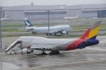 ヨッちゃんさんが、羽田空港で撮影したアシアナ航空 747-48Eの航空フォト(飛行機 写真・画像)