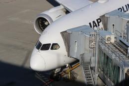 鶴の旅人さんが、羽田空港で撮影した日本航空 787-8 Dreamlinerの航空フォト(飛行機 写真・画像)