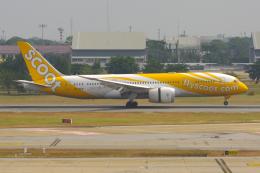PASSENGERさんが、ドンムアン空港で撮影したスクート (〜2017) 787-8 Dreamlinerの航空フォト(飛行機 写真・画像)
