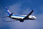パンダさんが、静岡空港で撮影した全日空 737-881の航空フォト(飛行機 写真・画像)