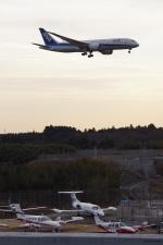 yusuke@HNDさんが、成田国際空港で撮影した全日空 787-8 Dreamlinerの航空フォト(写真)