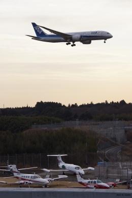 yusuke@HNDさんが、成田国際空港で撮影した全日空 787-8 Dreamlinerの航空フォト(飛行機 写真・画像)