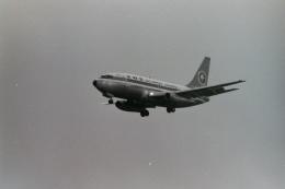 うすさんが、伊丹空港で撮影した全日空 737-281/Advの航空フォト(飛行機 写真・画像)