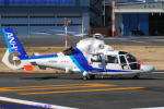 Chofu Spotter Ariaさんが、東京ヘリポートで撮影したオールニッポンヘリコプター AS365N3 Dauphin 2の航空フォト(写真)