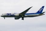 あしゅーさんが、羽田空港で撮影した全日空 787-8 Dreamlinerの航空フォト(写真)