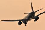 リーペアさんが、羽田空港で撮影した日本航空 777-346/ERの航空フォト(飛行機 写真・画像)