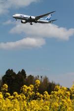 RAOUさんが、成田国際空港で撮影した全日空 787-8 Dreamlinerの航空フォト(写真)