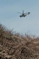 あきらっすさんが、市ヶ谷地区で撮影した陸上自衛隊 EC225LP Super Puma Mk2+の航空フォト(写真)