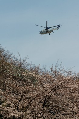 あきらっすさんが、市ヶ谷地区で撮影した陸上自衛隊 EC225LP Super Puma Mk2+の航空フォト(飛行機 写真・画像)
