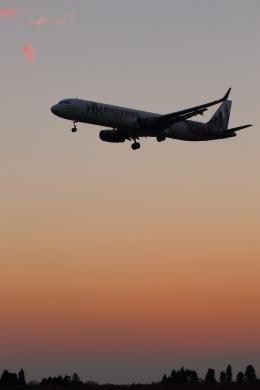 多楽さんが、成田国際空港で撮影した香港エクスプレス A321-231の航空フォト(写真)