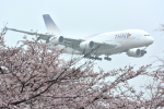 リーペアさんが、成田国際空港で撮影したタイ国際航空 A380-841の航空フォト(飛行機 写真・画像)