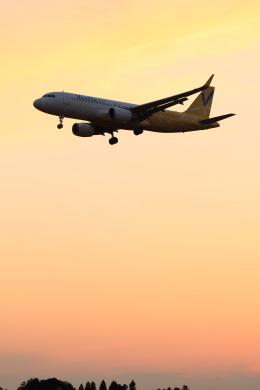 多楽さんが、成田国際空港で撮影したバニラエア A320-214の航空フォト(写真)