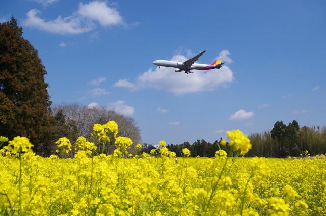 航空フォト:HL8286 アシアナ航空