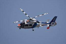 kumagorouさんが、仙台空港で撮影したオールニッポンヘリコプター AS365N2 Dauphin 2の航空フォト(写真)