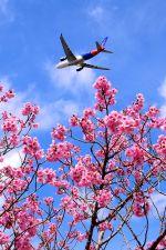 まいけるさんが、成田国際空港で撮影したエアカラン A330-202の航空フォト(写真)