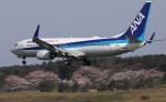 トリトンブルーSHIROさんが、庄内空港で撮影した全日空 737-881の航空フォト(飛行機 写真・画像)