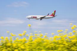 mameshibaさんが、成田国際空港で撮影したティーウェイ航空 737-8K5の航空フォト(写真)