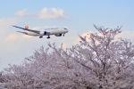 kingmengraiさんが、成田国際空港で撮影した日本航空 787-8 Dreamlinerの航空フォト(写真)