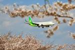kingmengraiさんが、成田国際空港で撮影した春秋航空日本 737-86Nの航空フォト(写真)