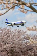 kingmengraiさんが、成田国際空港で撮影した全日空 777-381/ERの航空フォト(写真)