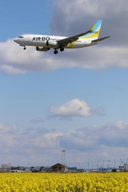 やまけんさんが、仙台空港で撮影したAIR DO 737-781の航空フォト(写真)