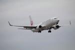 北の熊さんが、新千歳空港で撮影した日本航空 737-846の航空フォト(飛行機 写真・画像)